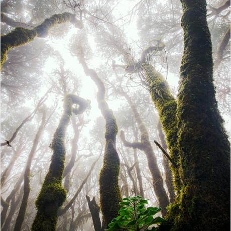 Garajonay National Park, La Gomera, 04-2015.