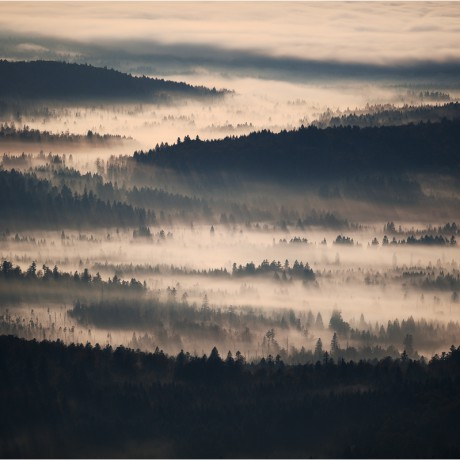 bavarian forest