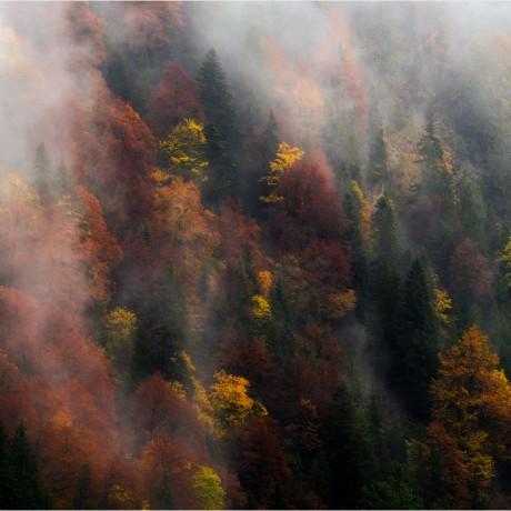 Fall in Karwendel mountains, Austria.