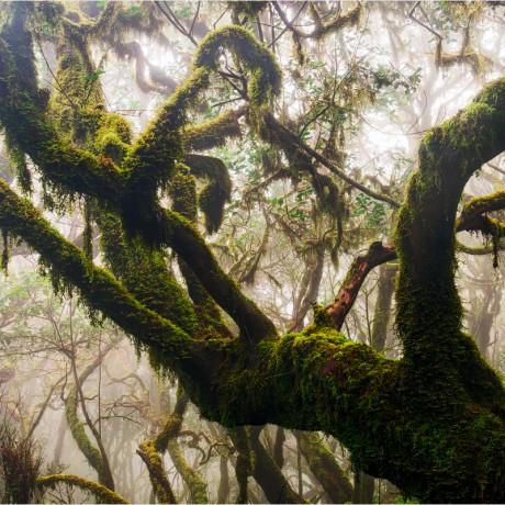 Garajonay National Park, La Gomera, 04-2015