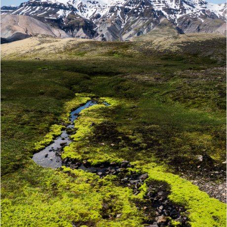 Leuchtend grünes Moos vor der Kulisse der Lónsöræfi